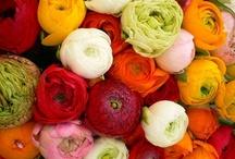 * * Flowerz * * / by Maryanne Appel