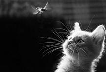 what's new pussycat? / by FloreDina Tsiaga