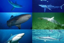 Sharks and other sea creatures / My favorite critters / by Natalie Barbach