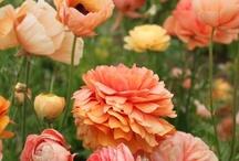 Coral & Peach / by Julia Rodriguez