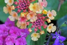 In the garden / Photos from my garden: spring, summer, fall and winter