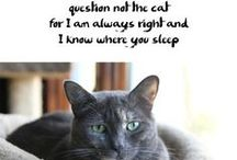 Haiku by Cat™ / see through feline eyes / read haiku written by cats / then feed us tuna
