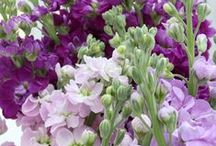 Flowers and Springtime