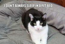 Calvin T. Katz, the Most Interesting Cat in the World / The Most Interesting Cat in the World