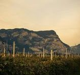 We Are Mezzacorona / Our favorite photos from Northern Italy at our vineyards and winery.