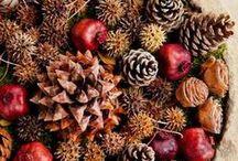 Pinecones & Nuts