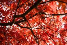 Autumn Notes / Things that inspire excitement for the fall season!