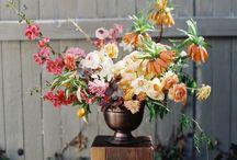 Flowers: MULTI SPRING