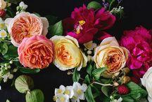 Flowers: MULTI SUMMER