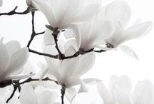 MUSING • florals / Words that grow, flowers that speak