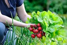 How Green is Your Garden? / Keep your garden fresh with these tips! / by Direct Energy