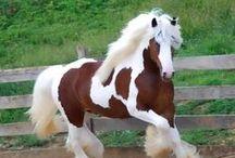 Horses <3 / by Mari Moss