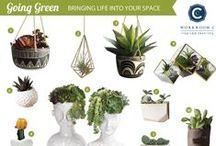 Green Inside / by Workroom C by Carolyn Rebuffel Designs
