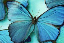 butterfly / by Denise Adams