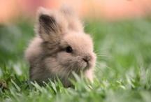 • Beautiful, Cute & Funny Animals