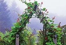 Vertical Gardening / by NationalGardenBureau