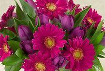 Cut Flowers / by National Garden Bureau