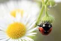 Kesä - summer / Season and the characteristic features of nature - -Kesän ihanuus, maut, tuoksut, värit, ihmiset kesässä, alkukesän pyörryttävän huumaavan vehreä luonto, juhannus, linnut, kasvit, sauna, ulkogrillaus ja loppukesän kylläinen jo hyvästejään jättävä kukkaisluonto, marjoineen.......