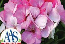 2013 Flower Introductions / National Garden Bureau New Flower Introductions for 2013 / by National Garden Bureau
