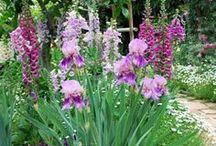 Garden Paths / Wind around the garden and relax