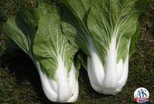 2015 New Vegetables / by National Garden Bureau
