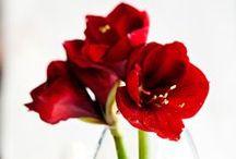 FLOWERS - KUKAT