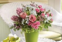 Get Well / Wish someone well and a speedy recovery from surgery or illness with flowers, a plant or a gift basket.