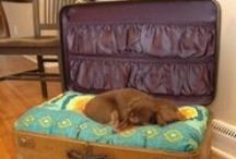 Bring your Dog on Vacation! / Brunswick Plantation is a pet friendly Resort!