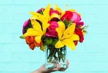 Summer Bouquets / Summer is a season of celebrations—and lots of gorgeous summer flowers! From big occasions to no-special-reason-at-all, surprise someone with a summer flower arrangement, filled with big blossoms in bright, sunny colors. Take advantage of the beautiful bouquets you can only get during these warmer months!