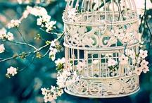 For birds & flowers!