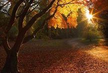 Autumn's leaving