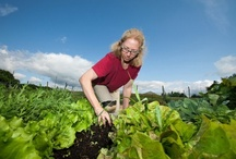 Grown your Own Organic Garden / With 2013 right around the corner, maybe your New Year's Resolution will include eating healthier...and what better way than with an organic garden!