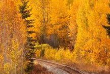 Autumn / by Yvonne de Boer