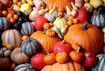 Pumpkins & Gourds / by Melissa Rasley