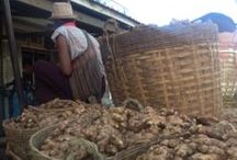 Toby's Travels to Myanmar / HQO's VP of Supply Chain, Toby Eck, traveled to Myanmar to hand select our organic ginger source.