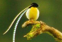 wonderful world / birds