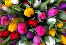 Flowers Galore / Flowers | Roses | Tulips | Beautiful floral arrangements