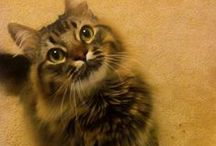 CAT Goodies & THINGS & Jackson Galaxy / cat furniture, beds, health, clothes, etc / by Grayce Blair