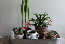 For the house / Ideas to keep the house organized and also pretty decorations.  / by Antia