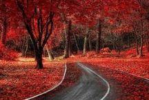 colorful landscapes (kolorowe krajobrazy)