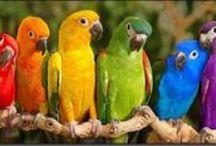 colorful animals (kolorowe zwierzęta)
