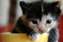 Adorable  / ranges anywhere from kittens to men / by Amanda Titus