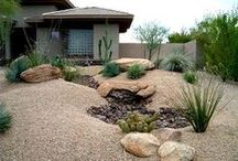 xeriscaping / by atomicmama