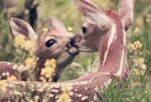 Animals-Deer / Deer / by Ellary Branden