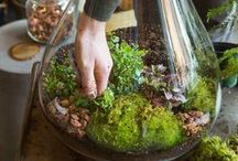 Crafts-Plants / by Ellary Branden