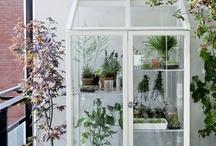 DIY: Garden  / by Samantha Metzinger