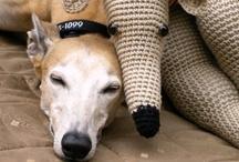Greyhounds / by Inka Smith
