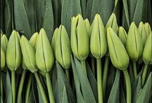 Signs of Spring / by Jennifer Mantle