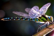 Dragonfly Heaven•ness❣ / I love dragonflies ❤