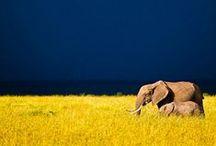 Wildlife Photography / by Samantha Metzinger